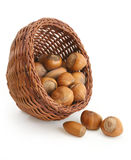 Hazelnuts in a basket royalty free stock photography