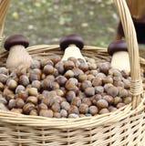 Hazelnuts  in basket Royalty Free Stock Image
