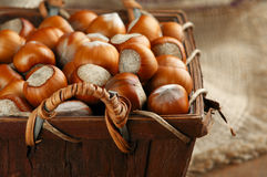 Hazelnuts in basket Stock Photography