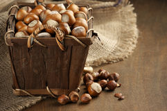 Hazelnuts in basket Stock Images