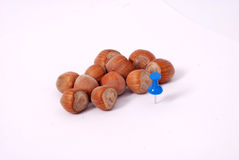 Hazelnuts with blue pushpin Stock Photo