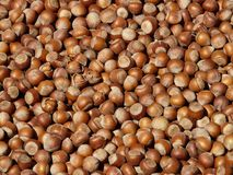 Hazelnuts, Brown, Nuts, Open Royalty Free Stock Photo