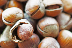 Hazelnuts. Bunch of ripe hazelnut spoke above a hazelnut Royalty Free Stock Image
