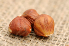 Hazelnuts on burlap Stock Photos