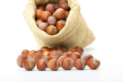 Hazelnuts in a burlap bag on white background Royalty Free Stock Images