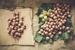 Hazelnuts. On a burlap sack background Stock Photography