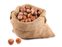Hazelnuts in canvas sack Stock Image