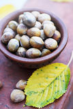 Hazelnuts in a ceramic bowl Royalty Free Stock Image