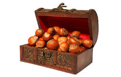Hazelnuts in chest Stock Image