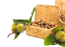 Hazelnuts and chestnuts in a wicker basket. On a white background Stock Images