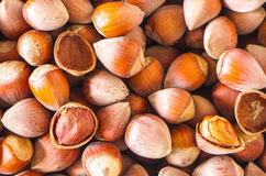 Hazelnuts Royalty Free Stock Images