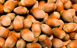 Hazelnuts. Close range suitable for background Stock Images