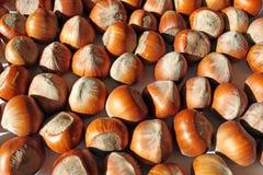Hazelnuts Royalty Free Stock Images