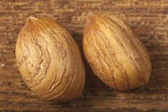 Hazelnuts close up Stock Image