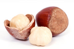 Hazelnuts closeup. Close up of hazelnuts on a white background Royalty Free Stock Images