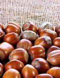 Hazelnuts closeup Royalty Free Stock Image