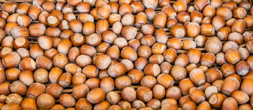 Hazelnuts Royalty Free Stock Photos
