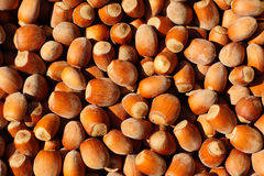 Hazelnuts. Closeup on the hazelnut yield Royalty Free Stock Images