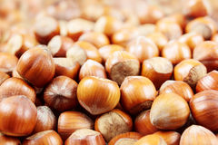 Hazelnuts closeup Stock Photo