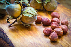 Hazelnuts cluster filbert nuts in the hard shell. Royalty Free Stock Images