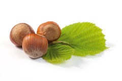 Hazelnuts Composition Royalty Free Stock Images