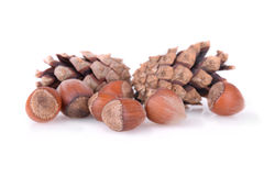 Hazelnuts with cones Royalty Free Stock Image