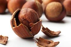 Hazelnuts cracked Royalty Free Stock Photo