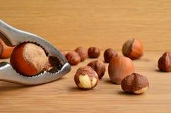 Hazelnuts cracking Stock Photo