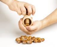 Hazelnuts cracking process Stock Image