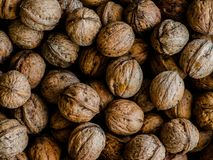 Hazelnuts in daylight royalty free stock photography