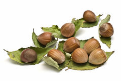 Hazelnuts on dry leaves. Some hazelnuts with leaves isolated on a white background stock images