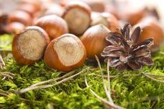 Hazelnuts (filbert) Stock Photo