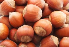 Hazelnuts or filbert Stock Images