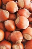 Hazelnuts or filbert Stock Photo