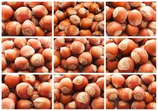 Hazelnuts or filbert nuts. Collection of hazelnuts, filbert nuts making background Stock Photo