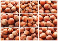 Hazelnuts or filbert nuts. Collection of hazelnuts, filbert nuts making background Royalty Free Stock Photo