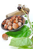 Hazelnuts and filbert sapling. Hazelnuts in a bowl with a filbert sapling on white background Stock Images