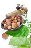 Hazelnuts and filbert sapling Stock Images