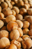 Hazelnuts, filbert on  wooden background Royalty Free Stock Photo