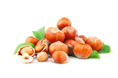 Hazelnuts. Filberts in shells and green leaves, food ingredients Royalty Free Stock Photography