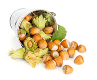 Hazelnuts flowing from tin bucket Royalty Free Stock Photos