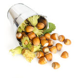Hazelnuts flowing from tin bucket Stock Photos
