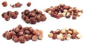 Hazelnuts. Forest hazelnuts isolated on white background Stock Photography