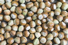 Hazelnuts, freshly picked. Full frame photo stock photos