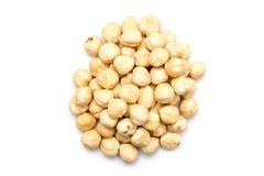 Hazelnuts Fruits Stock Images