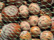 Hazelnuts in a green bag mesh. Macro photography of multiple hazelnuts types inside a green bag mesh. Additional RAW file format available for download stock images