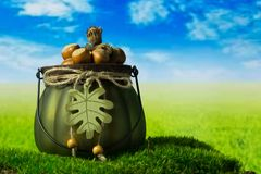 Hazelnuts in the green decorative pot on the grass. Hazelnuts in the green decorative pot on the green fantasy landscape Royalty Free Stock Images