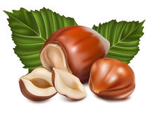 Hazelnuts with  green leaves. Photorealistic  illustration. Hazelnuts with leaves Stock Photo