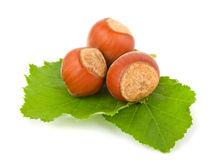 Hazelnuts with green leaves Stock Photos