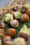 Hazelnuts in a green nut shells Stock Images